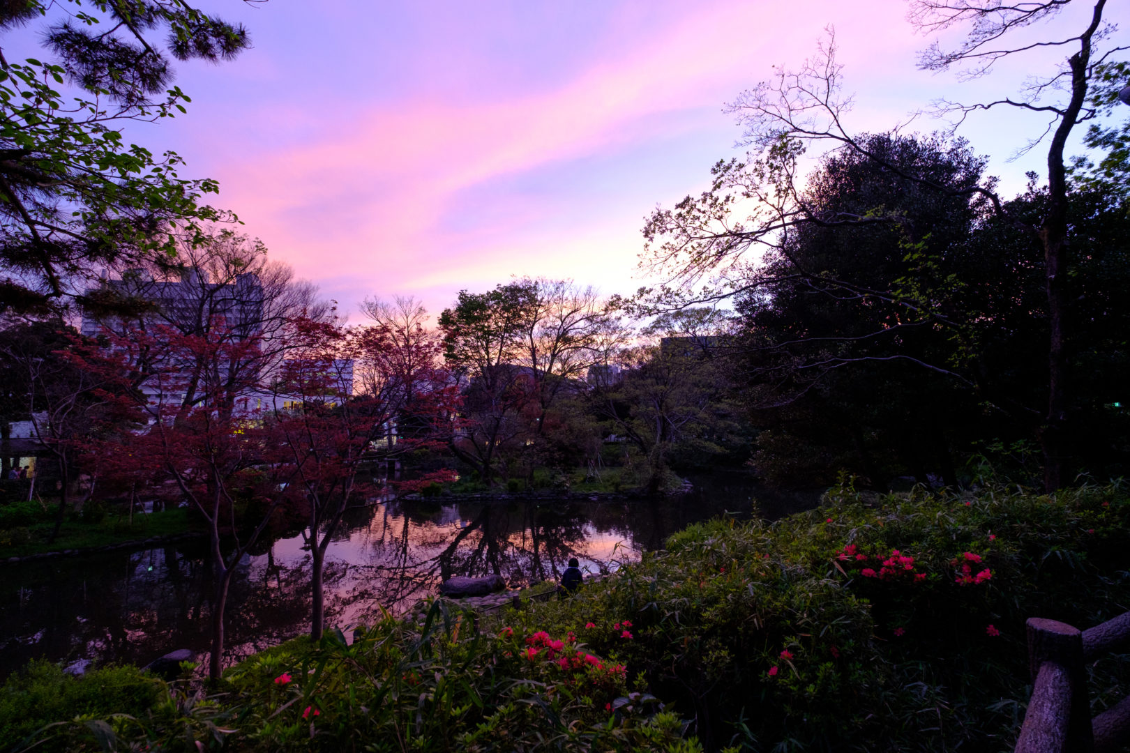 A beautiful purple sunset looking over the pond at Arasugawanomiya Memorial Park in Roppongi Hills, Tokyo